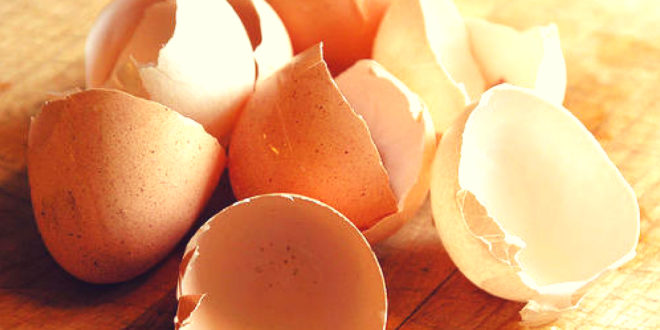 IIT Kharagpur generates electricity from Eggshells