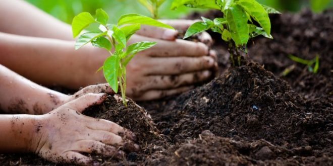 Plant for the Planet !
