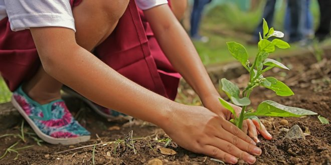 Planting compulsory for students-Rajasthan !